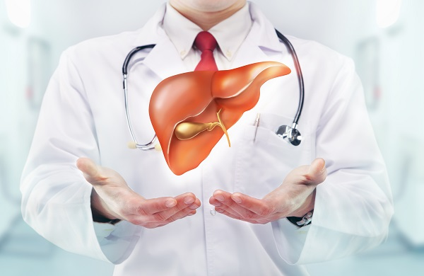 doctor holding a liver
